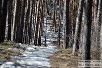29 марта 2015 - Лес Комсомольского района Тольятти со снегом