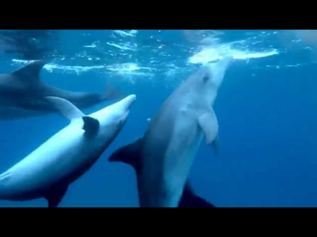 When dolphins bored