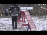 Бамс на соревнованиях по аджилити на пионерской 19.10.14