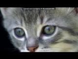 «эти разные кошки » под музыку MOYYO - Отжигать. Picrolla