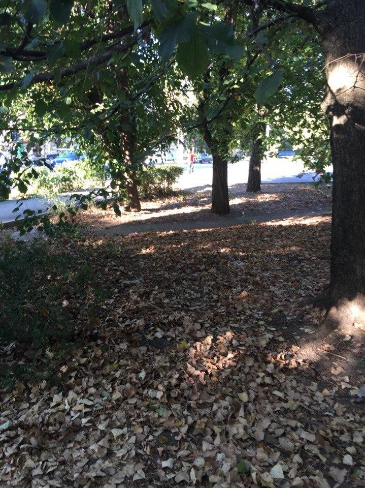 В Таганроге на улице Свободы автоледи на Suzuki на полном ходу врезалась в два дерева и кирпичный столб