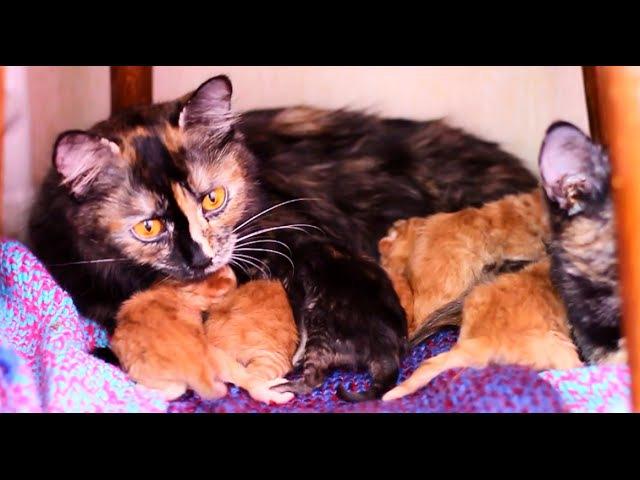 Помощь кошке при родах и прекрасных 6 новорожденных котят :)