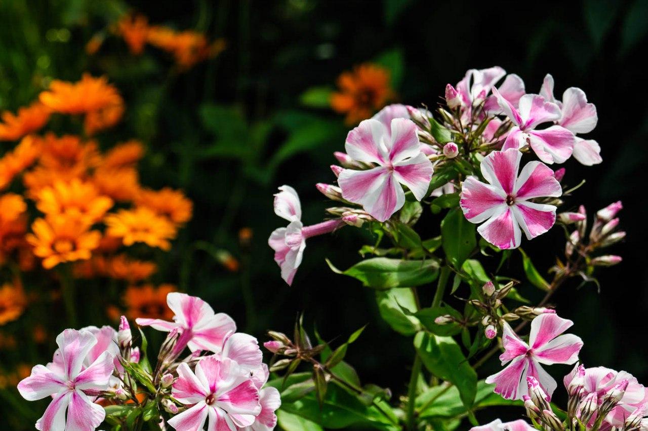 Соликамский ботанический сад имени Г.А. Демидова