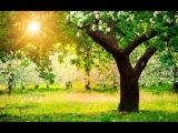 Евгений Бачурин - Дерева вы мои, дерева.