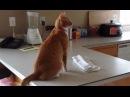 Всё-таки кошки самые прикольные