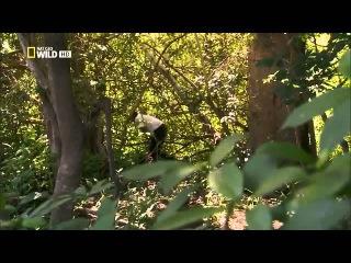 Документальный фильм Чупакабра 2014 смотреть онлайн в хорошем качестве HD