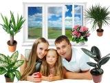 Комнатные растения.  ТОП полезных для здоровья комнатных растений.  Часть 1.