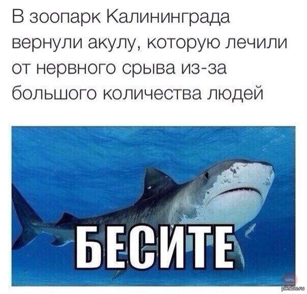 http://cs624327.vk.me/v624327868/1e2d8/YErDgVCahBI.jpg