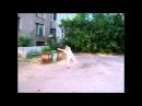 Samoe Smeshnoe video! Самые ржачные приколы интернета 2015