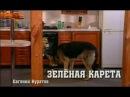 Возвращение Мухтара 1 сезон 7 серия Зелёная карета