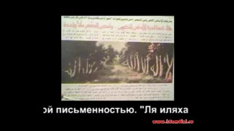 Знамение Аллаха Дерево с надписем Нет Бога Кроме Аллаха и Мухаммад его Посланник