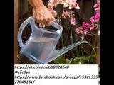 Как правильно полить орхидею. Метод замачивания.