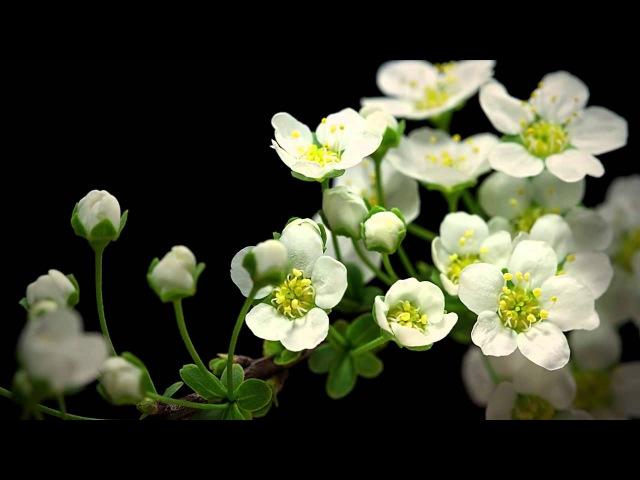 Как из ростка вырастает красивый цветок в макро съёмке