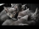 A Den Of Purring Kittens