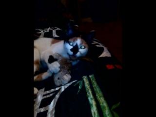 С этой кошкой лучше не шутить!))) Мирана и ее добыча!)