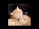 Страстный поцелуй!)
