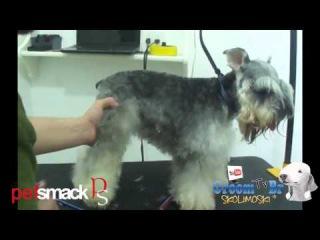 Groom Tv Br - Tosa facil do Schnauzer - Anderson Barros HD #39