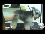 Groom Tv Br - Tosa facil do Schnauzer - Anderson Barros HD #39
