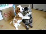 Дружба кошек и собак. Трогательное видео дружбы и милые приколы с кошками и соба ...