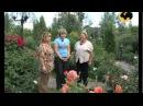 Летний сад. Ландшафтные хитрости серия 53