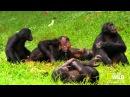 Супер видео Досмотрите это до конца! О смысле жизни по сути! Личная эволюция, начни это! 2015, HD
