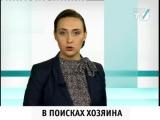 Новости Приморского района, выпуск от 09.04.2015