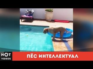 Пёс интеллектуал. Додуматься до такого))... ( HOT VIDEOS | Смотреть видео HD )