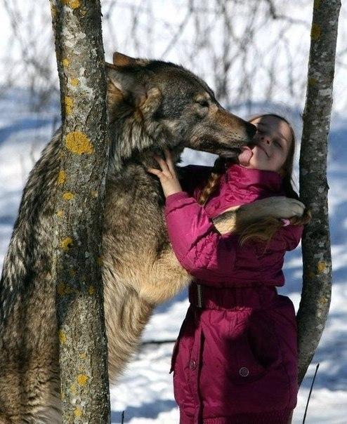 Самый большой волк все ее