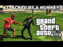 GTA 5 Online: ATTACKED BY A MONKEY! (Funny Moments Fails)