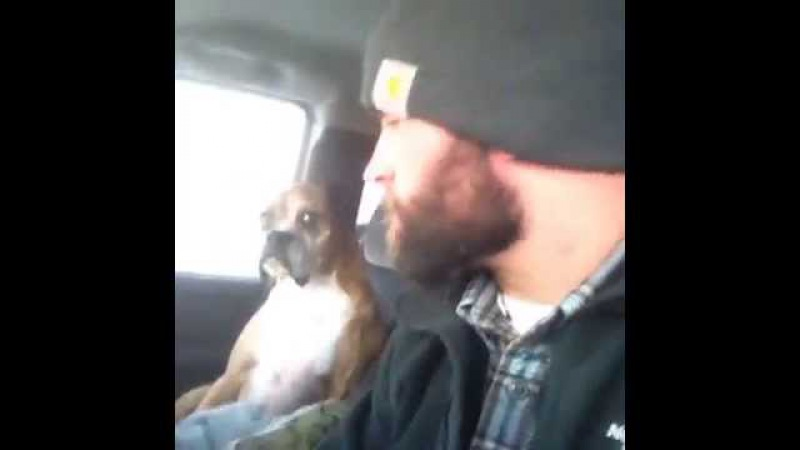 Boxer's Death Stare! (MUST SEE)