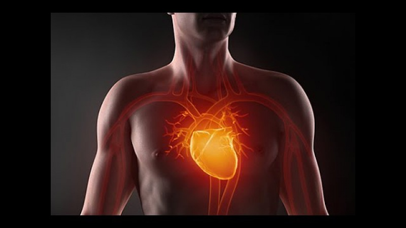 Как работает сердце человеа Инфаркт миокарда первые признаки