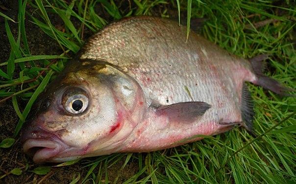 кошачий корм прикормка для рыбы