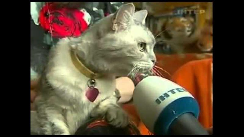 Cамая громкая кошка на планете (Смоки)