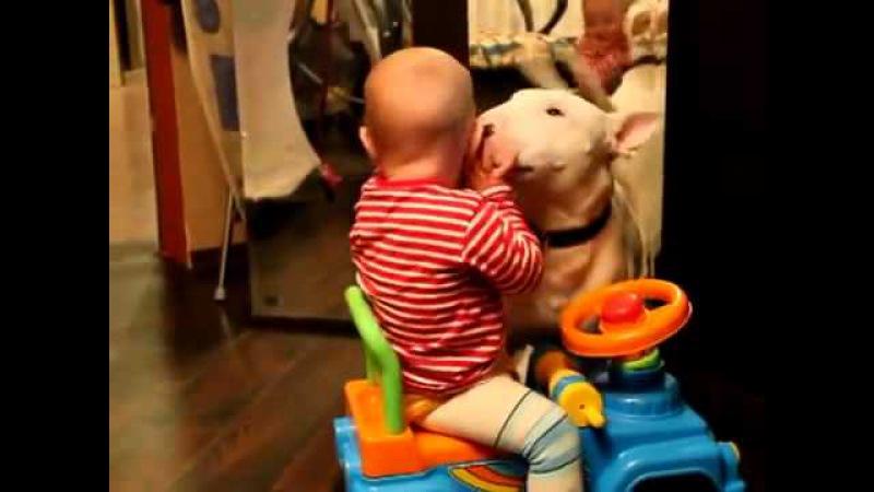 Bebe juega con bull terrier