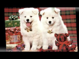 [CUTE] Cute animals celebrate christmas