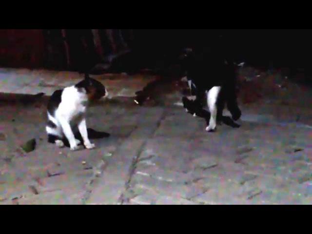 Mata kucing di Malam hari Sangat Menyeramkan/ Cat Eyes in the Night so Creepy