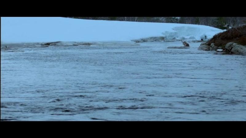 Фильм Волк / Varg / Даниель Альфредсон / Daniel Alfredson. (2008)(Швеция,Норвегия,Финляндия)