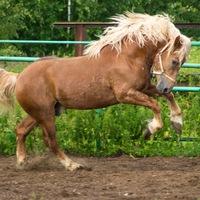 Логотип Прогулки на лошадях в Калуге