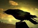 Чёрный Ворон - песня