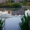 Защитим озеро Торфяное
