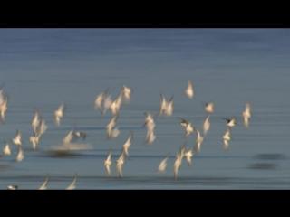 BBC Тайная жизнь птиц 03 Жизнь на краю