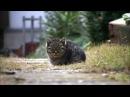 Ліричний відеоролик про котів