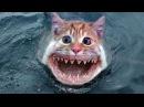 Рыбы-мутанты появились в реке Дон. Fish-mutant