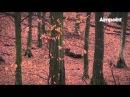 Охота на кабана подборка видео Hunters Video
