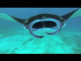 GoPro- Diving With Manta Rays