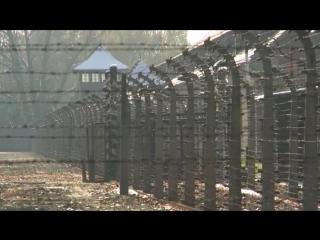 Трейлер Холокост – клей для обоев_