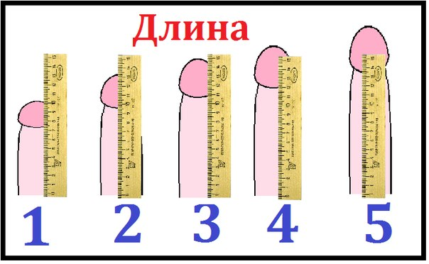 какой размер члена считается нормальным Семилуки