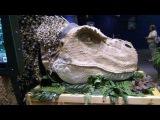 393. Америка. Виртуальные динозавры. Планетарий. Музей науки и истории.