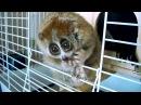 Лемуры самые милые животные в мире