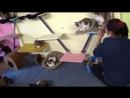 Девочки и Федор орудуют в домике у кошек. 04.10.15ммммммммммссссссс